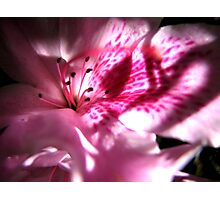 Pink Shadows Photographic Print