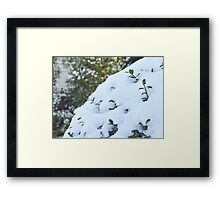 Life From Snow  Framed Print