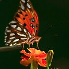 Soft Winged Flutter By by Mary Campbell