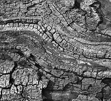 Fallen Tree Detail by Laurie Sinnett