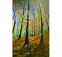 Forrest in fall Photographic Print