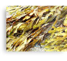 Seaweed On An Irish Beach Metal Print