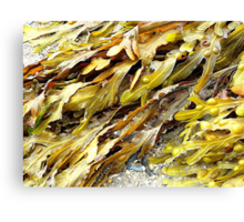 Seaweed On An Irish Beach Canvas Print