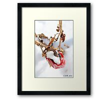 Cared For From Above Framed Print