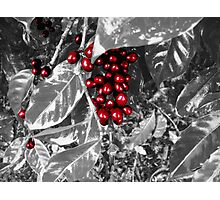 Selected Coffee Photographic Print