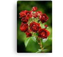 Red Roses from Rambures Canvas Print
