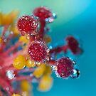 Sparkle. by Sherstin Schwartz