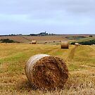 Bales with a View by Braedene