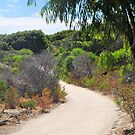 Cape Naturaliste by Margaret Stevens