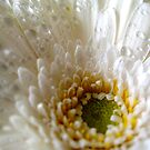 Gerbera on her wedding day by Rosy Kueng Photography