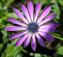 Purple Passion by Janelle Austin