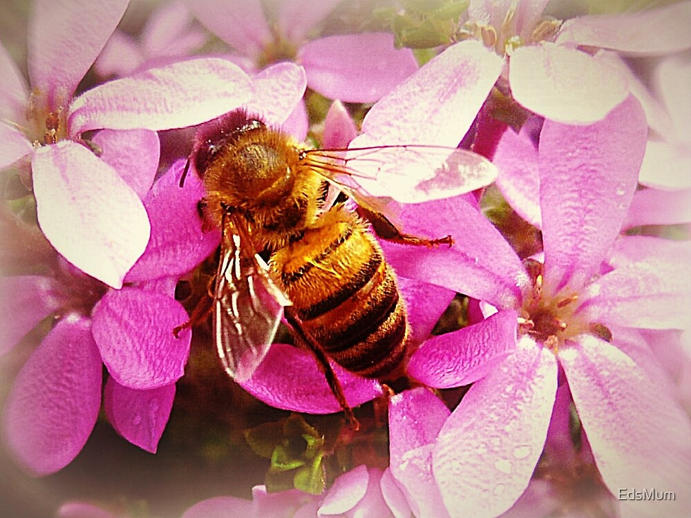 *Pink Bush and Bee* by EdsMum