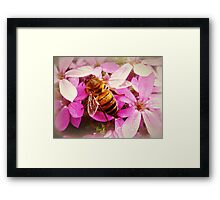 *Pink Bush and Bee* Framed Print