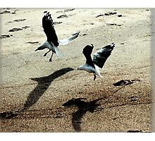 """gulls"" Photographic Print"