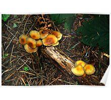 fungi at lockwood beck Poster
