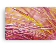 colors of my world 05 Canvas Print