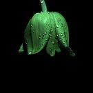 Tulip in Green Major by Nikki Trexel