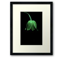 Tulip in Green Major Framed Print