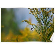 Prairie Bee Poster
