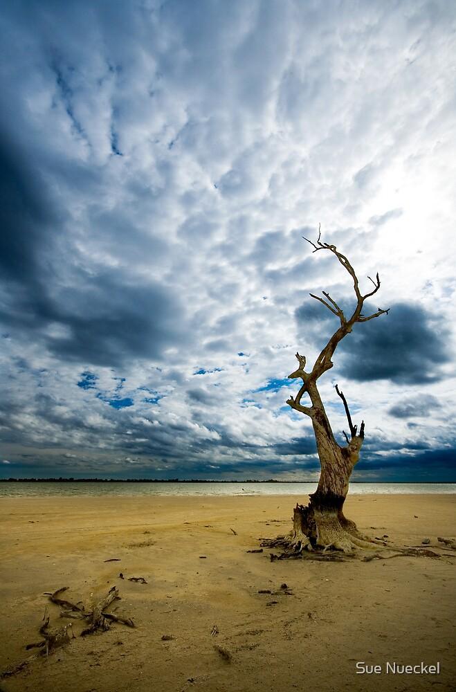 Murray River   Sth Australia by ╰⊰✿Sue✿⊱╮ Nueckel