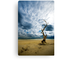 Murray River   Sth Australia Canvas Print
