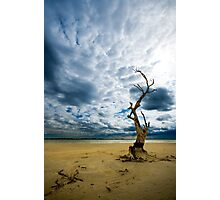 Murray River   Sth Australia Photographic Print