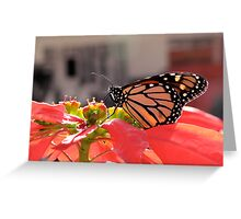 Beautiful Monarch Butterfly Greeting Card