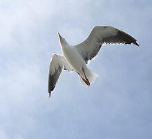 In Flight by Liz Wear