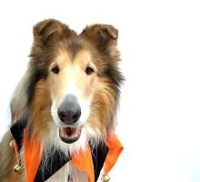 Collie in Jester Collar for Halloween by Jan  Wall