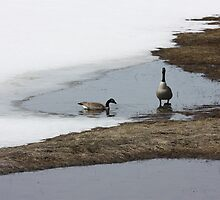 First Arrivals - Spring Thaw by salient