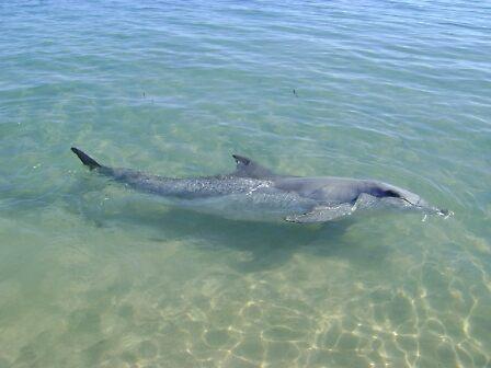 Dolphin Dreaming by Robert Bradley