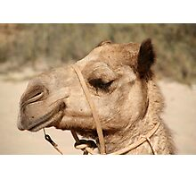 Camel on Cable Beach Photographic Print