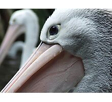 Pelican Eye Photographic Print