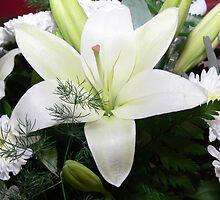 Flowers v2 by Sandra Chung