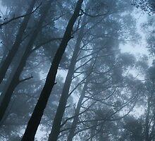 Saturday Fog by werxj