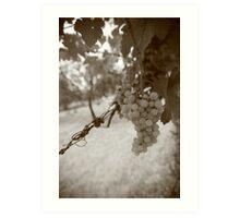 Italia Grapevine Art Print