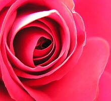The Rose by Jo  Young