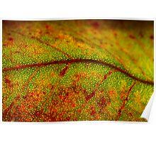 Leaf Landscape Poster