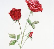 red red rose by Denise Martin