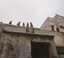 Rooftop viewings. by Barcelonesa1982
