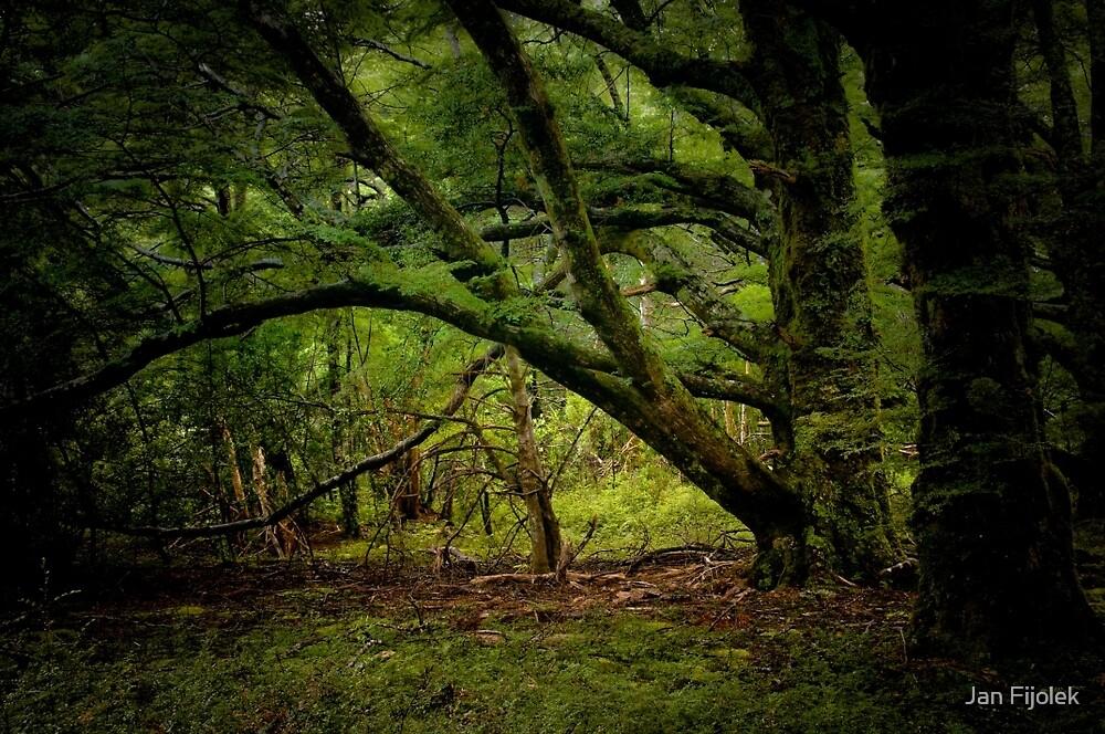 In The Forest by Jan Fijolek