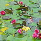 Lost Among The Lilies by BlueMoonRose