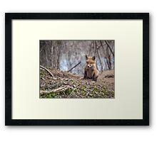 Kit Fox 2011-1 Framed Print