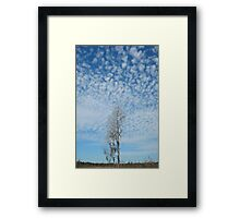 Cypress Under a Popcorn Sky Framed Print
