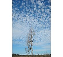 Cypress Under a Popcorn Sky Photographic Print