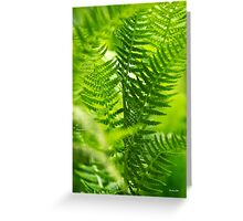 Green Fern Abstract Greeting Card