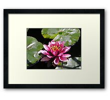 lilly of the lake Framed Print