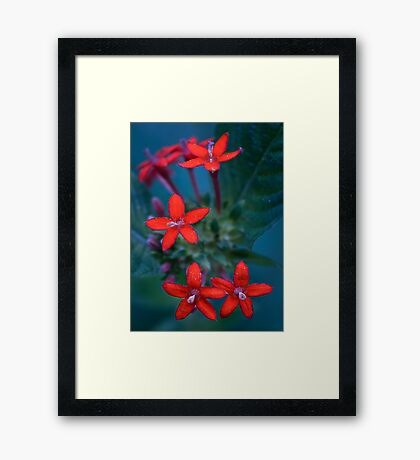 Colour Of Life XXX Framed Print