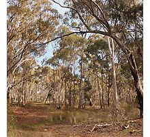 Looking through the gums Maldon Vic Australia Photographic Print