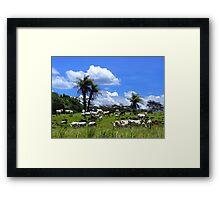 Cattle in Costa Rica Framed Print